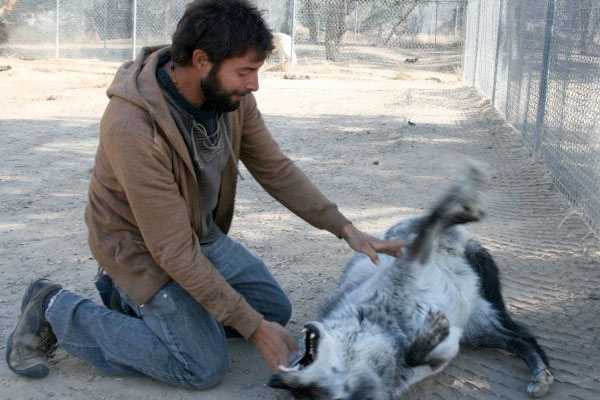 Back to the Wolf Sanctuary
